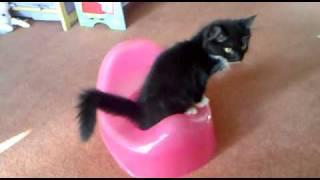 cat using potty LOL