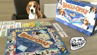 My Dog Cheats When Playing This Board Game! Cute Guilty Beagle Louie