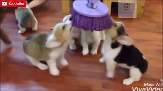 Funny Cat and Dogs compilation - Cute Dog and Cats videos 2019 | Selva Shocker Tamil | HD