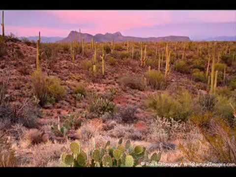 Alethea moves to Tucson