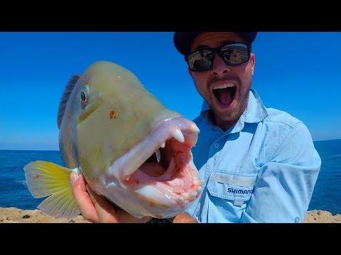 INSANE FISHING! (REMOTE ISLAND TRIP)