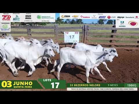 Lote 17