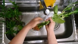스킨답서스, 개운죽 - 공기정화 식물 - 수경재배 물갈…