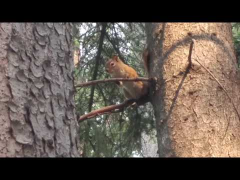 Squirrel At Foothills Camp - AB SDA Camp Meeting 2017