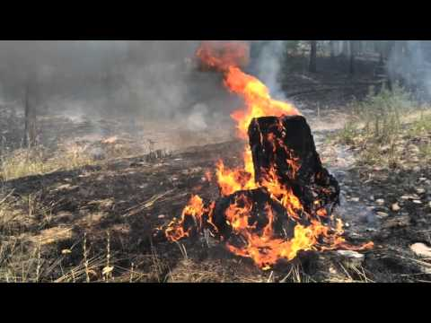 2016 Wildfire PSA2
