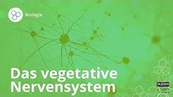 Das vegetative Nervensystem – einfach erklärt! – Biologie | Duden Learnattack