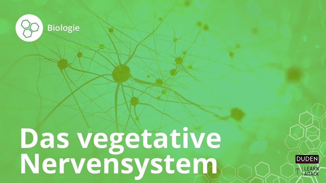 das vegetative nervensystem einfach erkl rt biologie duden learnattack youtube. Black Bedroom Furniture Sets. Home Design Ideas