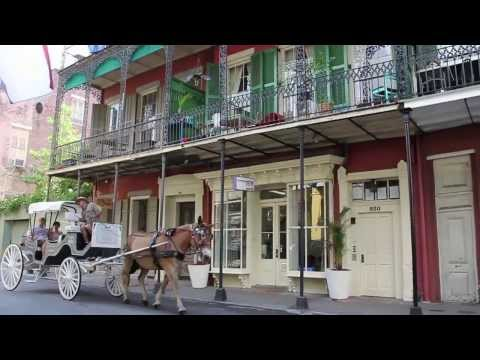 The French Quarter Vet - Short | New Orleans, LA