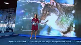 Новый закон запрещает содержать диких животных вквартирах