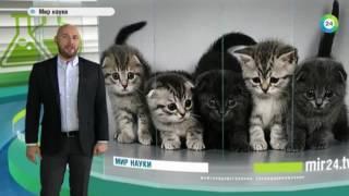 Гладить кошек опасно для здоровья