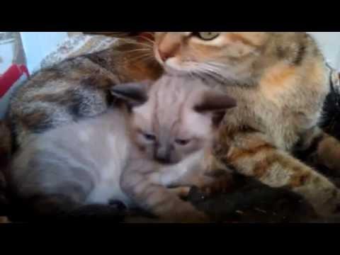 Cute kitten that loves to lickKaynak: YouTube · Süre: 51 saniye
