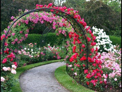 Арка под розу