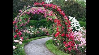 как сделать арку для плетистой розы