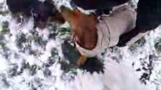 Dachshund & Yorkie X In The Snow