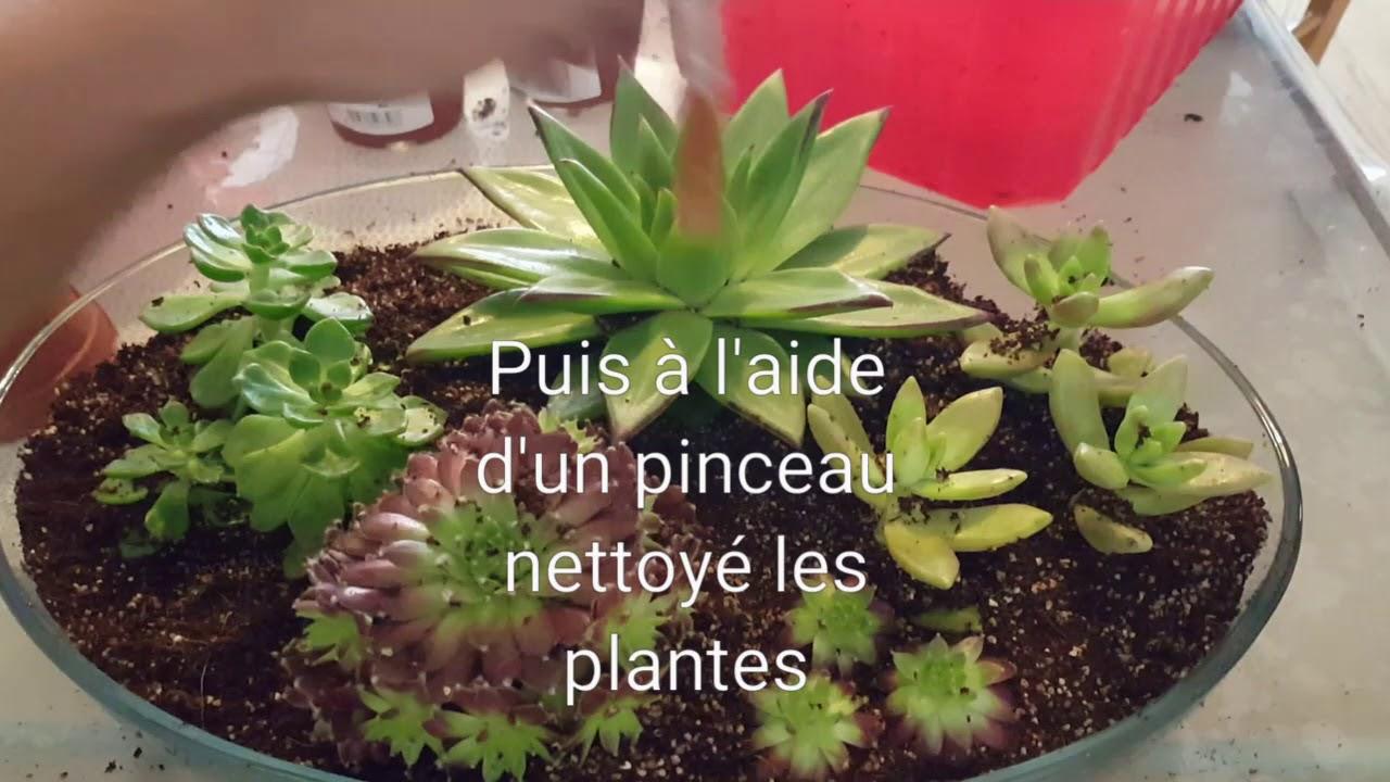 Terrarium Fermé Plante Grasse plante grasse , terrarium plante grasse , succulente