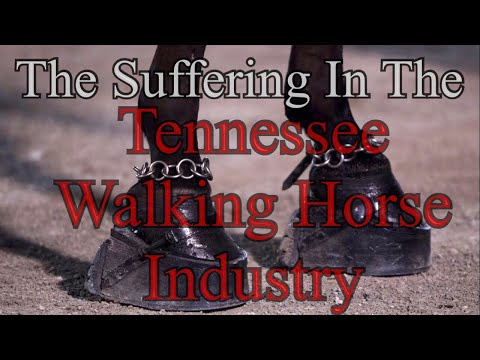 The Suffering In The Tennessee Walking Horse Industry