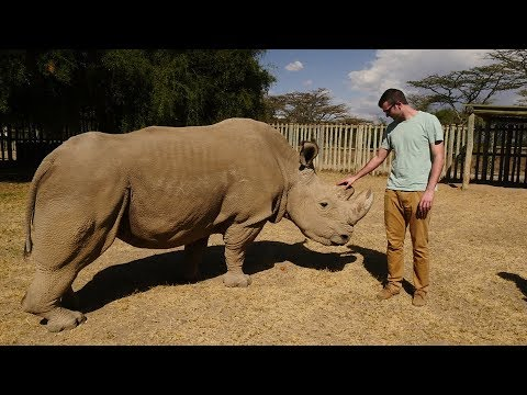 Meeting the Last Northern White Rhino in the World