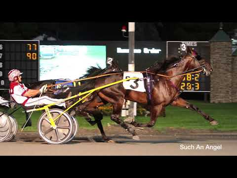 Paul Kelley On What He Looks For In A Standardbred Horse