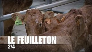 Dans les coulisses du marché aux bestiaux de Sancoins : le marché