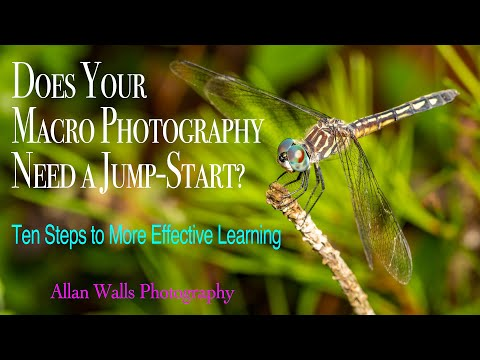 Does Your Macro Photography Need A Jump-Start? 10 Steps To More Effective Learning