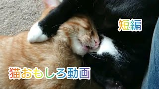 Cover images 猫おもしろ動画集 Cats funny videos
