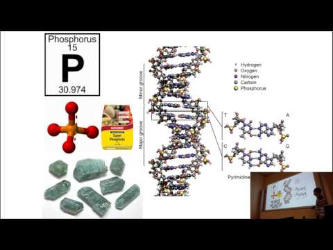 Phosphorous an Essential Nutrient