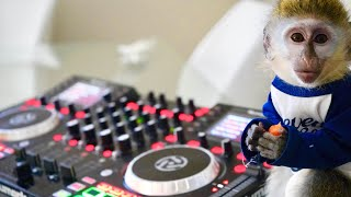 baby-monkey-learns-how-to-dj
