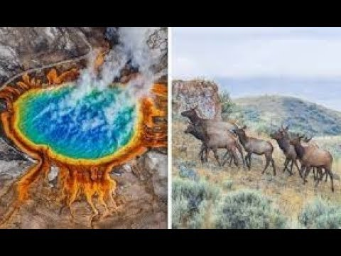 Yellowstone volcano! Animals Leaving by THOUSANDS from Active Supervolcano?