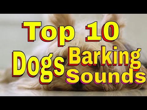 10-popular-dog-breeds-and-their-barks---hd-sound-effect-download-for-commercial-use