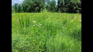 BMAP 2021 Webinar: Converting pasture to prairie