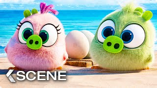 Hatchlings lose the Eggs Scene - THE ANGRY BIRDS MOVIE 2 (2019)