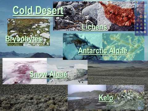 Terrestrial Biomes notes 1