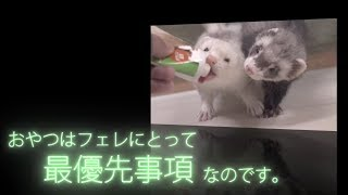 All subtitles in the movie are in Japanese. Raise a snack to a ferr...