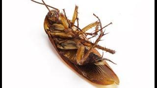 Residential Pest Control Bondi