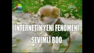 Boo Ismiyle Bilinen Pomeranian ırkını Can Paksoy Pazar Sürprizine Anlattı