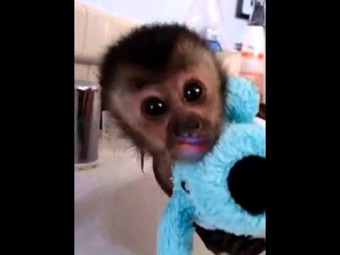 Monkey Momo