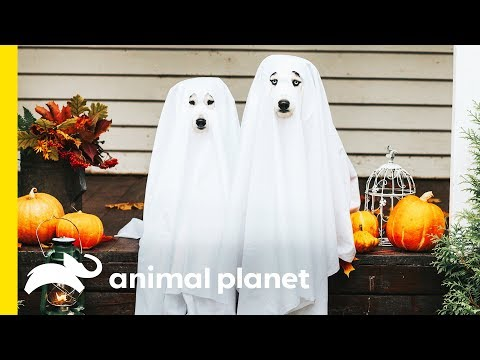 They're Hairy, Not Scary! Debunking the Superstitions around Halloween Animals