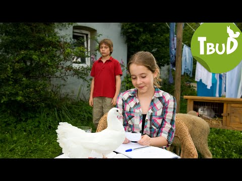 Turteltaube (Folge 11) | Tiere Bis Unters Dach | SWR Kindernetz