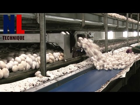 Modern Food Processing Technology with Cool Automatic Machines That Are At Another Level Part 12