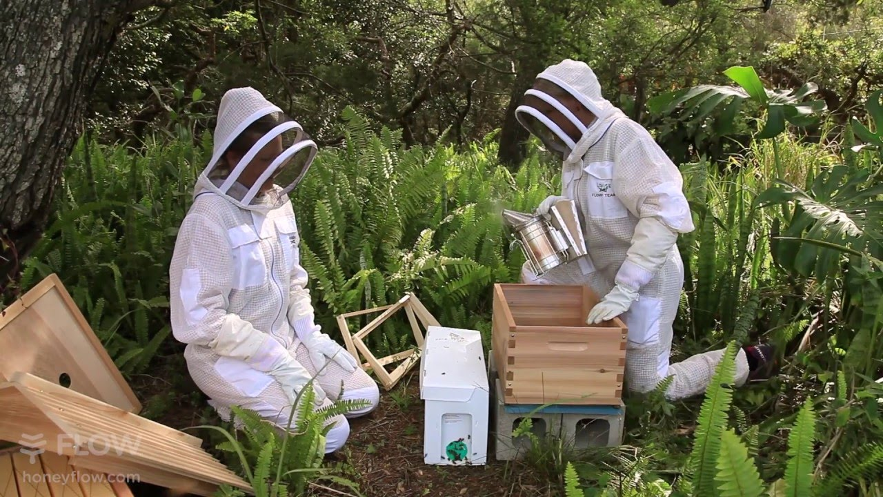 how to keep a beehive