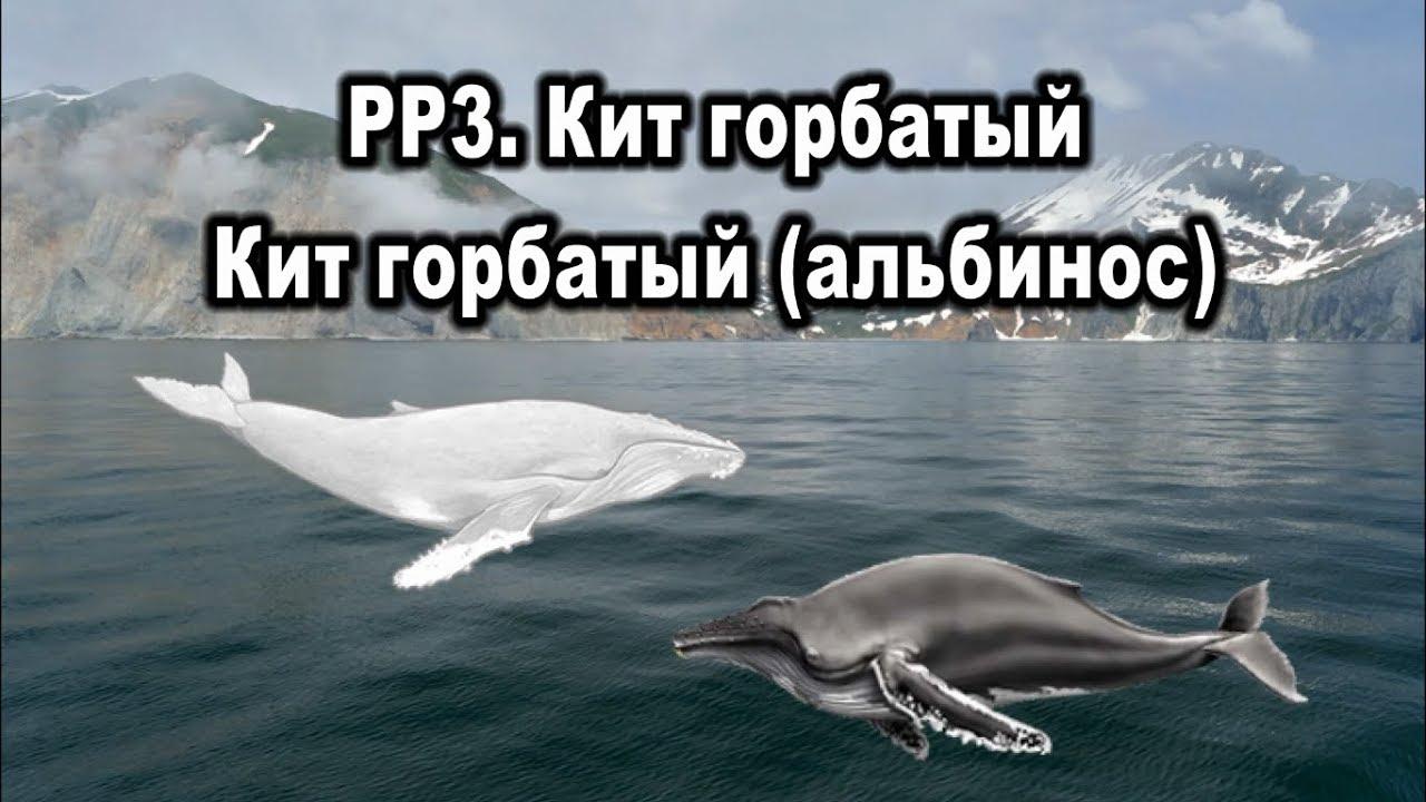 русская рыбалка 3 6