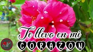 TE LLEVO EN MI CORAZON ❤️ TE AMO 💌 Hermoso mensaje de amor con lindo poema para dedicar