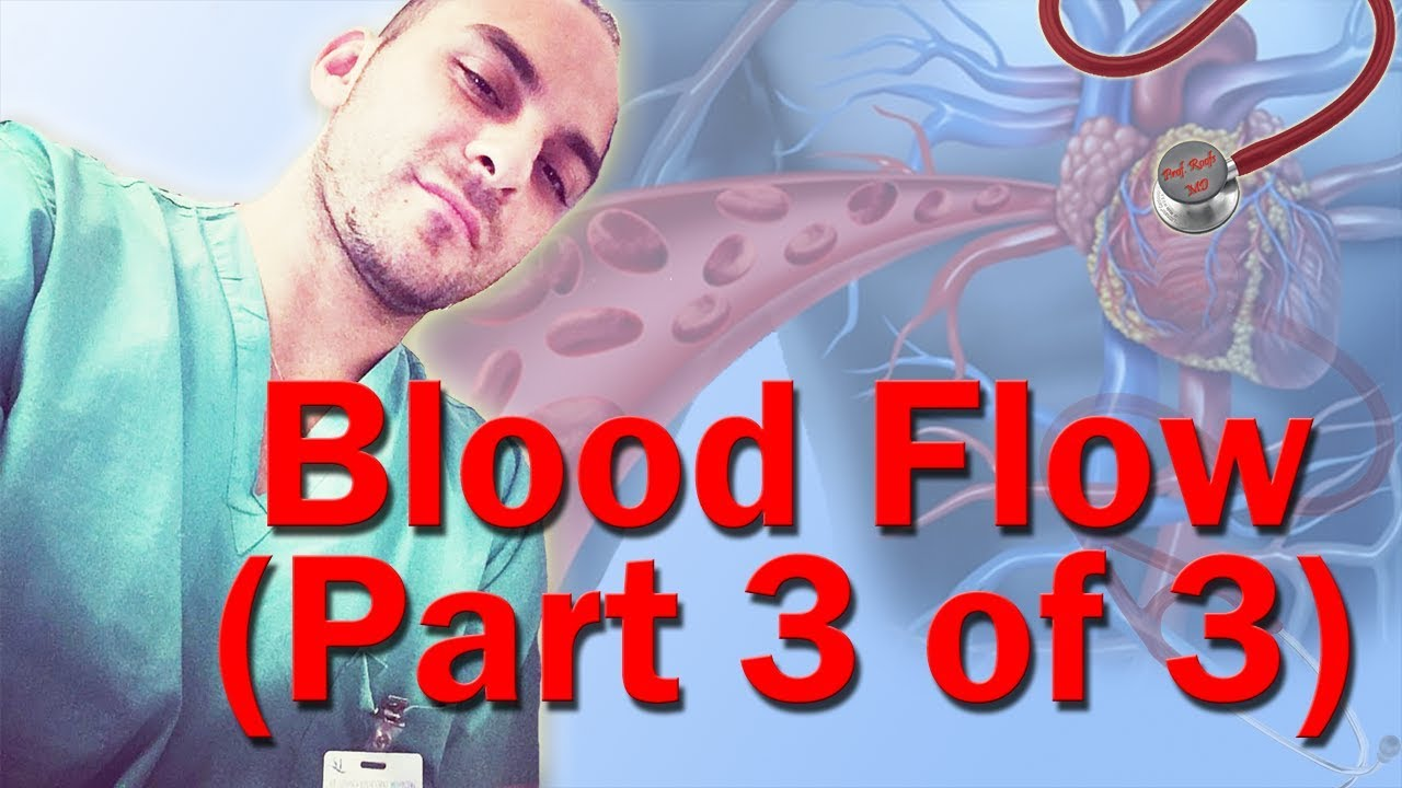 blood flow through the heart made easy (part 3 of 3) - youtube, Muscles