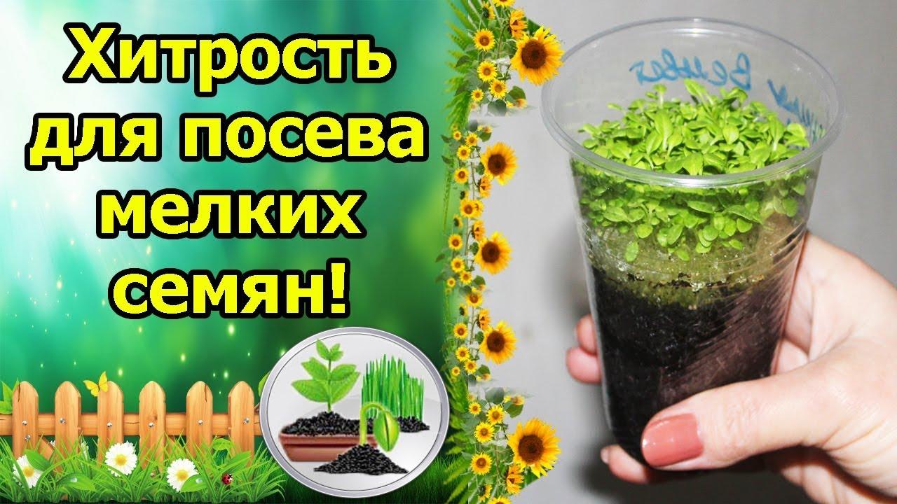 Рассада, саженцы и семена виолы предлагаем купить из лучших питомников в москве по каталогу, низкие цены, подарки!