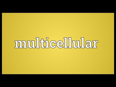 Multicellular Meaning