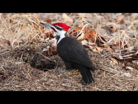 Calgary's Top 10 Wildlife Photography Hotspots