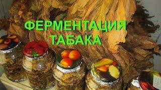 ДНЕВНИК ТАБАКОВОДА № 43  13.08. ФЕРМЕНТАЦИЯ ТАБАКА , ЧАСТЬ 1  ТАБАК