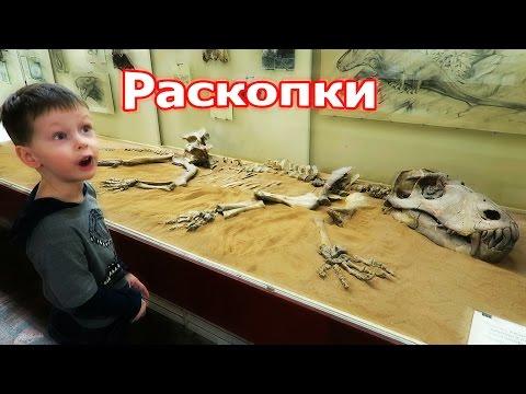 Скелеты динозавров, раскопки Палеонтологический музей в Москве