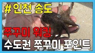쭈꾸미 낚시 인천 워킹포인트 TV바이트