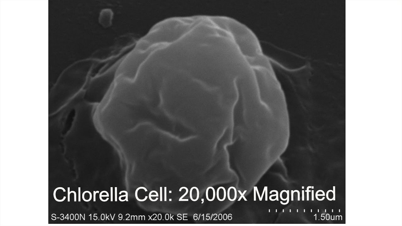 How The Chlorella Cell Wall Is Cracked Youtube